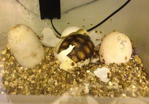 Hatchlings_7